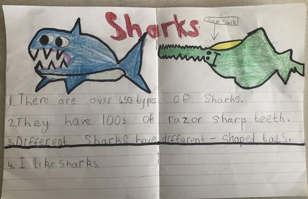 Reports on Animals